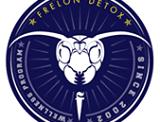 Frelon Detox : la piqûre qui vous veut du bien ?