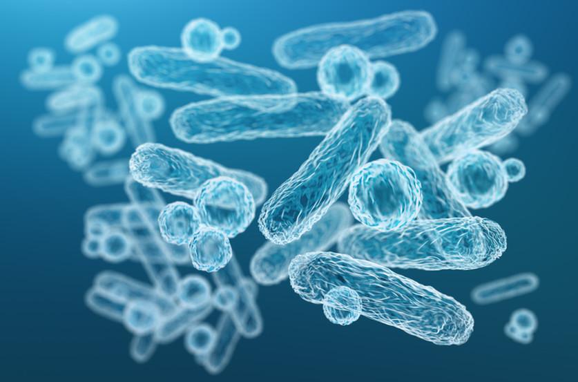 Les probiotiques chez les sportifs