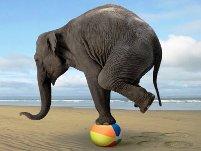 Faites comme cet éléphant pour renforcer vos chevilles !!!! © naturalrunningcenter.com